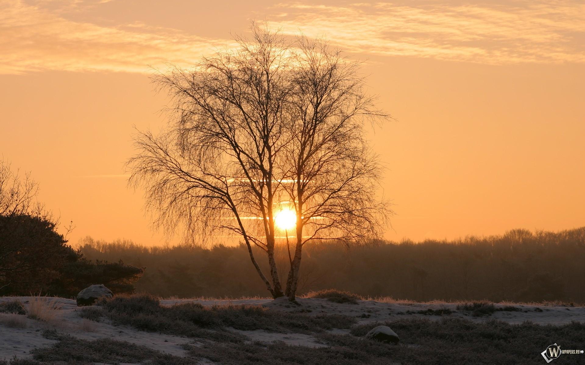 Зимний рассвет 1920x1200
