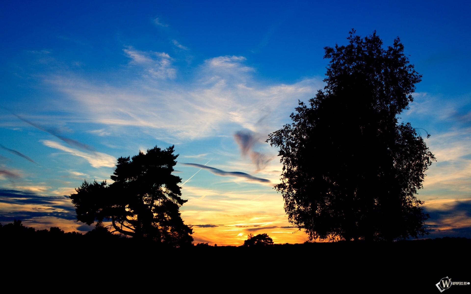 Облака за деревьями 1920x1200
