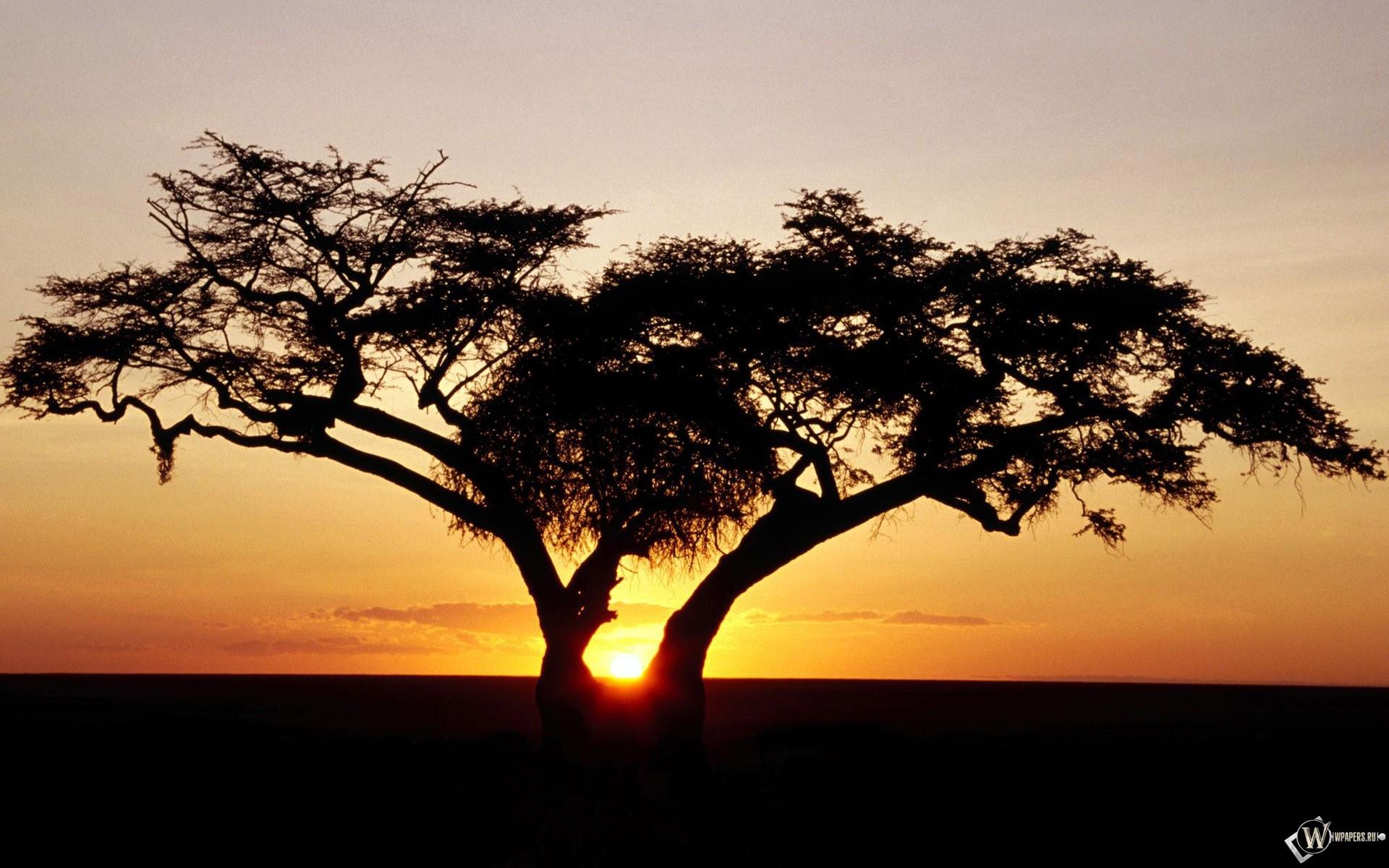 Одинокое дерево на закате 1920x1200