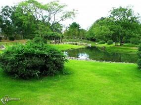 Обои Зеленый парк: Деревья, Пруд, Парк, Деревья