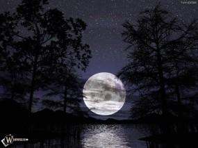 Обои Луна за деревьями: Деревья, Ночь, Луна, Деревья