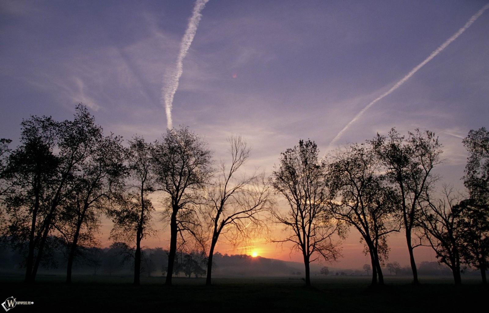 Деревья на фоне заката 1600x1024