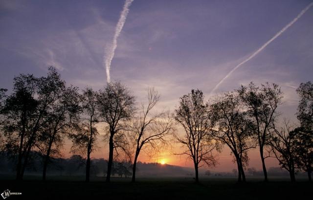 Деревья на фоне заката