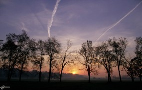 Обои Деревья на фоне заката: Деревья, Солнце, Закат, Деревья