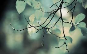 Обои Ветка: Зелень, Листва, Ветка, Деревья