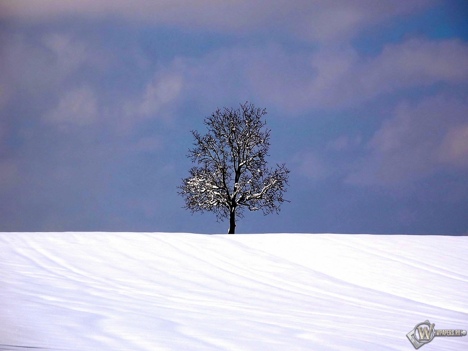 Дерево 1920x1440