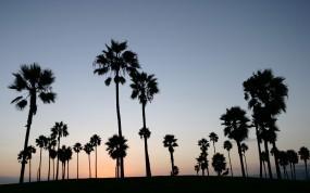 Обои Пальмы: Пальмы, Небо, Деревья
