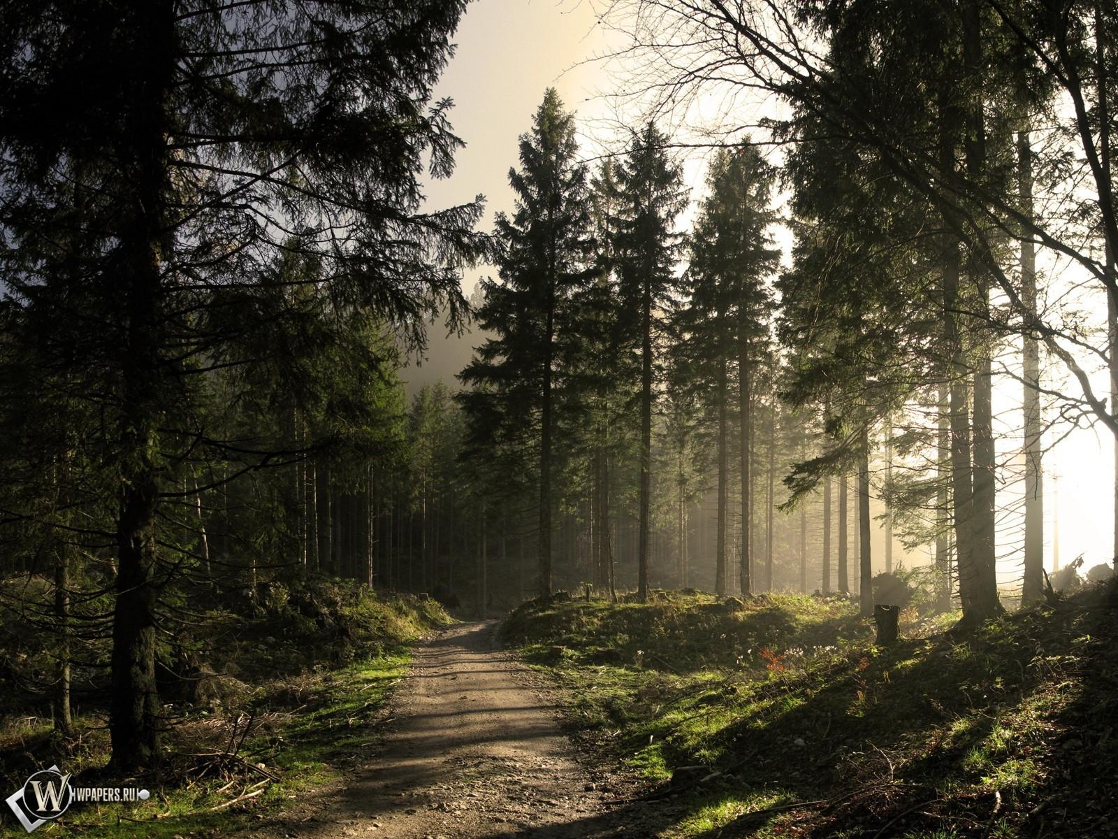 Обои солнечный лес лес солнце тропа