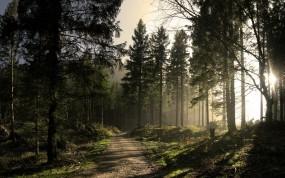 Обои Солнечный лес: Лес, Солнце, Тропа, Деревья