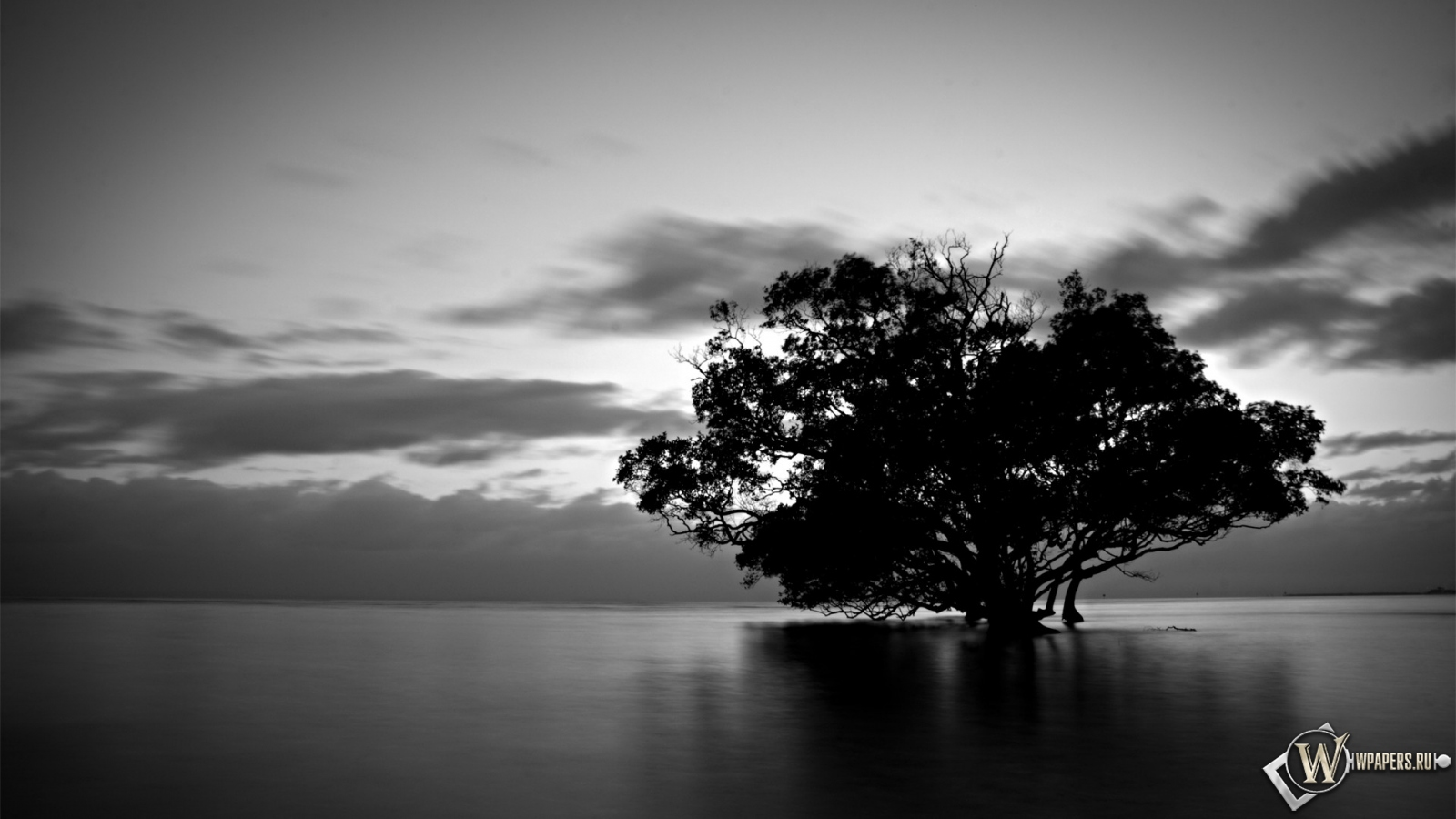 Обои дерево в воде вода природа тучи