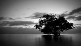 Обои Дерево в воде: Вода, Природа, Тучи, Дерево, Черно-белое, Деревья