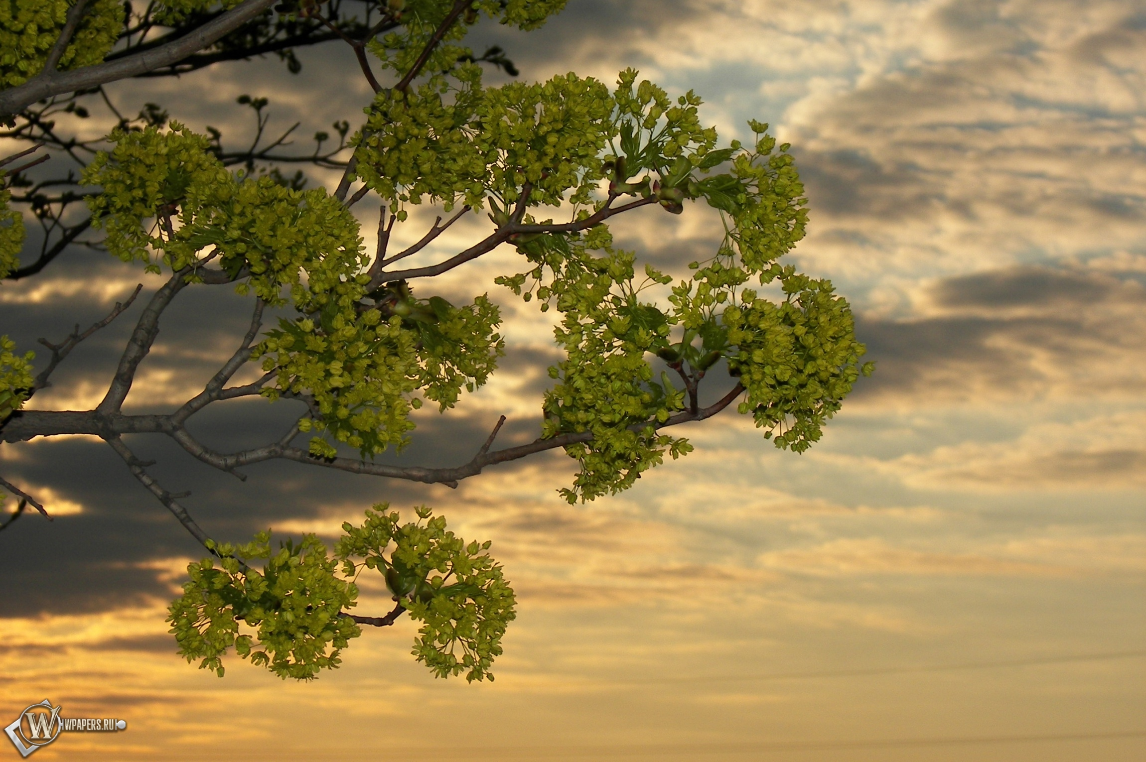 Дерево в закате 2300x1530