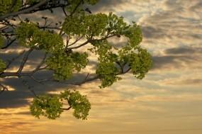 Обои Дерево в закате: Природа, Закат, Дерево, Деревья