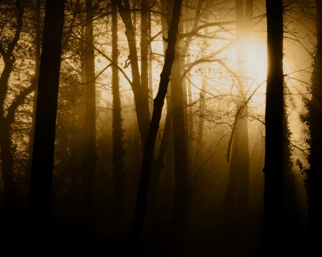 Густой лес
