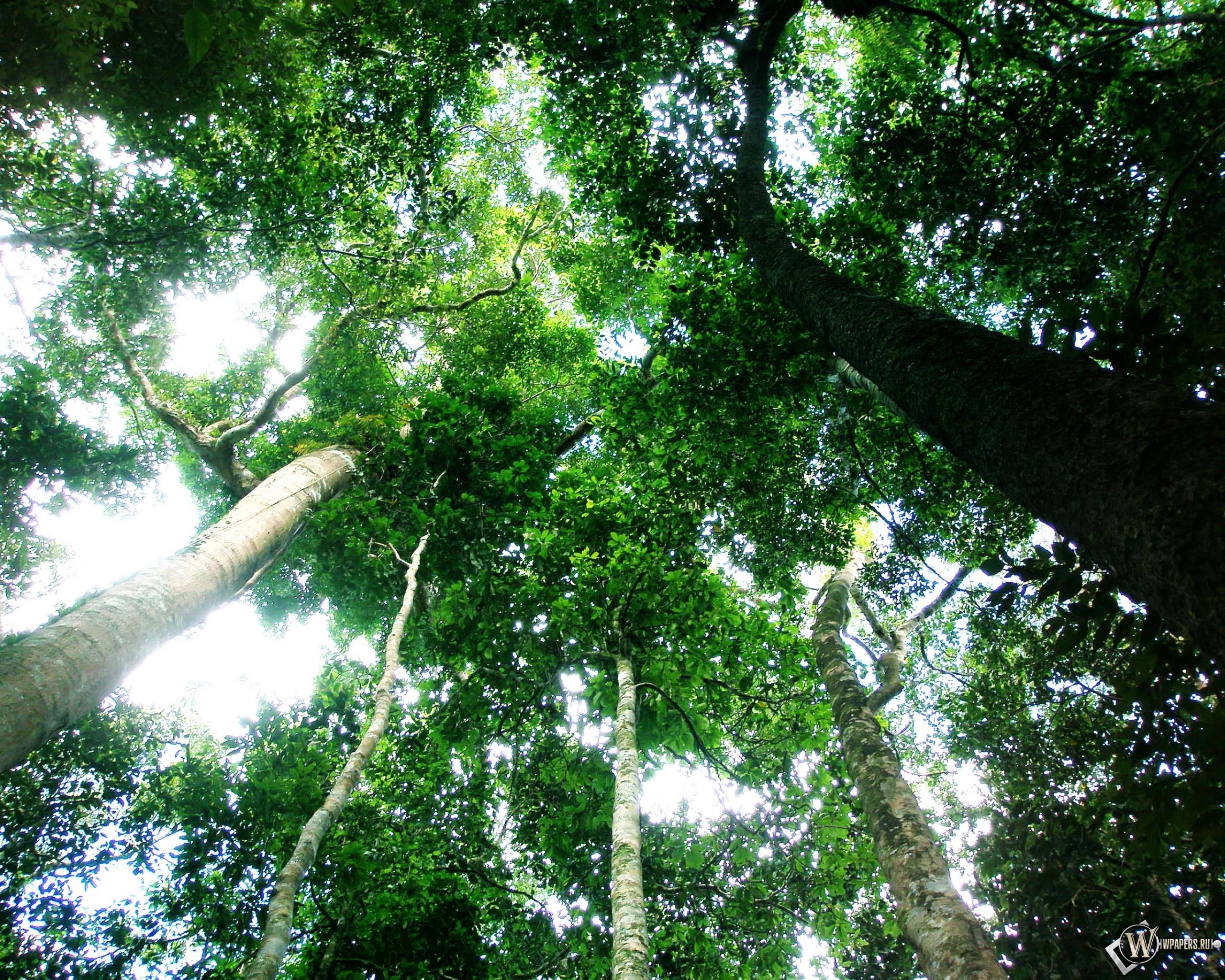 Обои тропический лес зелень лес