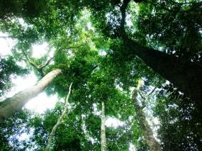 Обои Тропический лес: Зелень, Лес, Небо, Тропики, Деревья