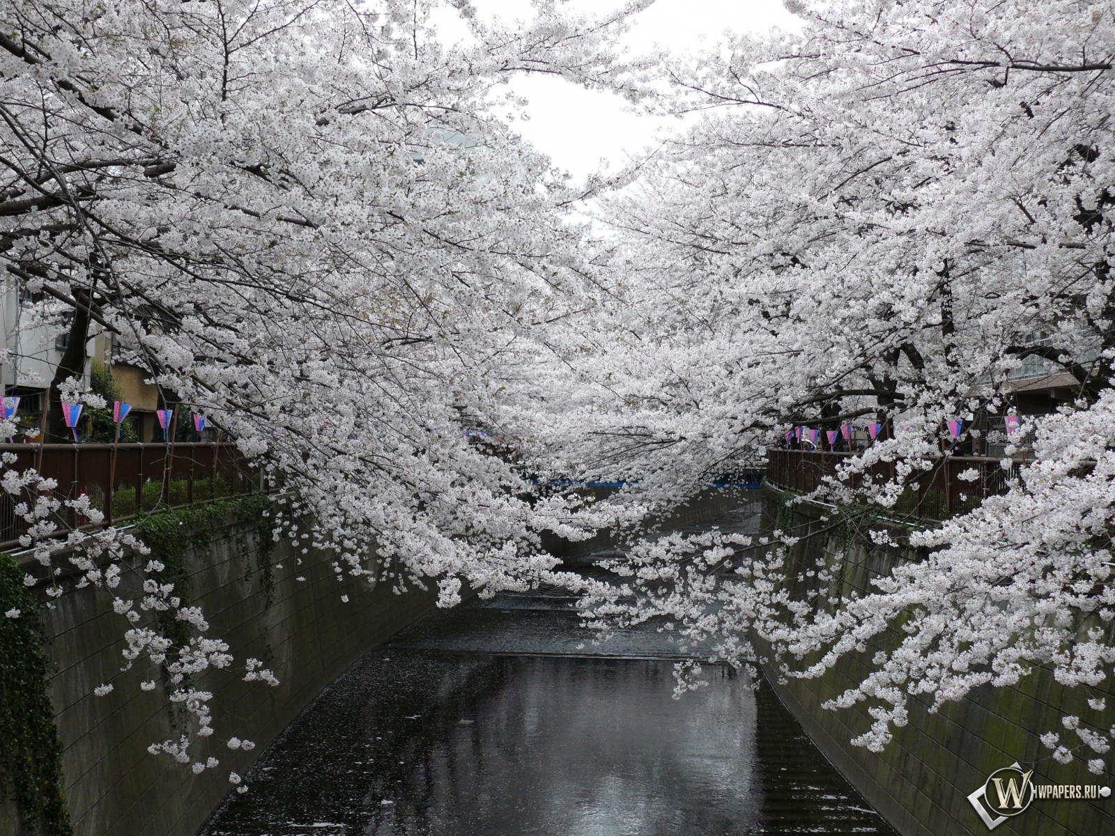 Парк япония сакура 1600x1200 картинки