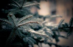 Обои Веточка ёлки: Снег, Ветка, Иголки, Елка, Деревья