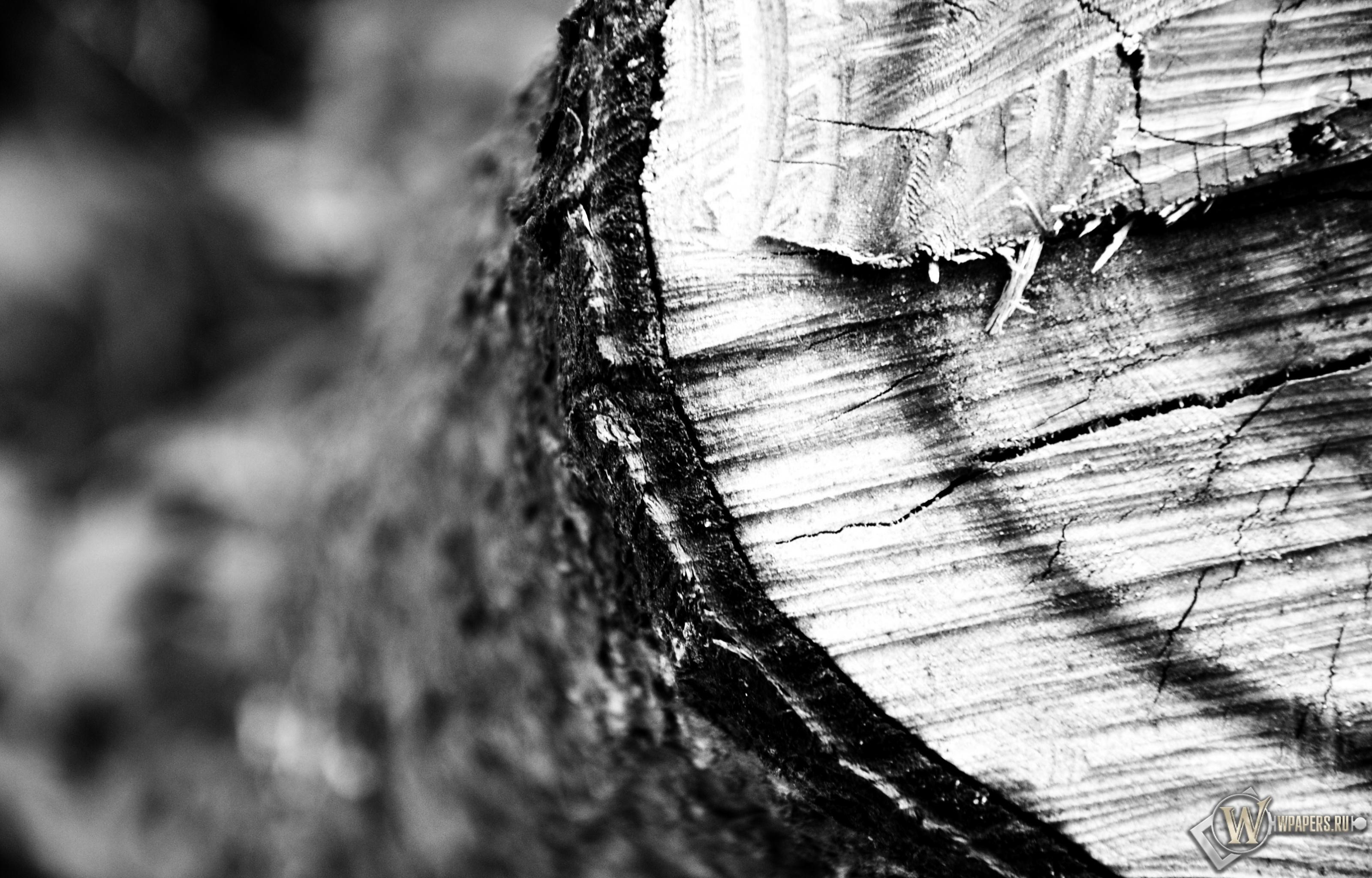 Обои разрез дерева на рабочий стол с