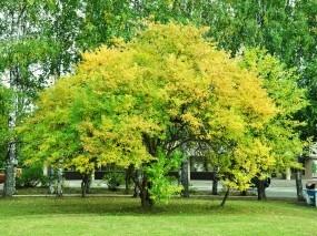 Обои красивое дерево: Зелень, Дерево, Деревья