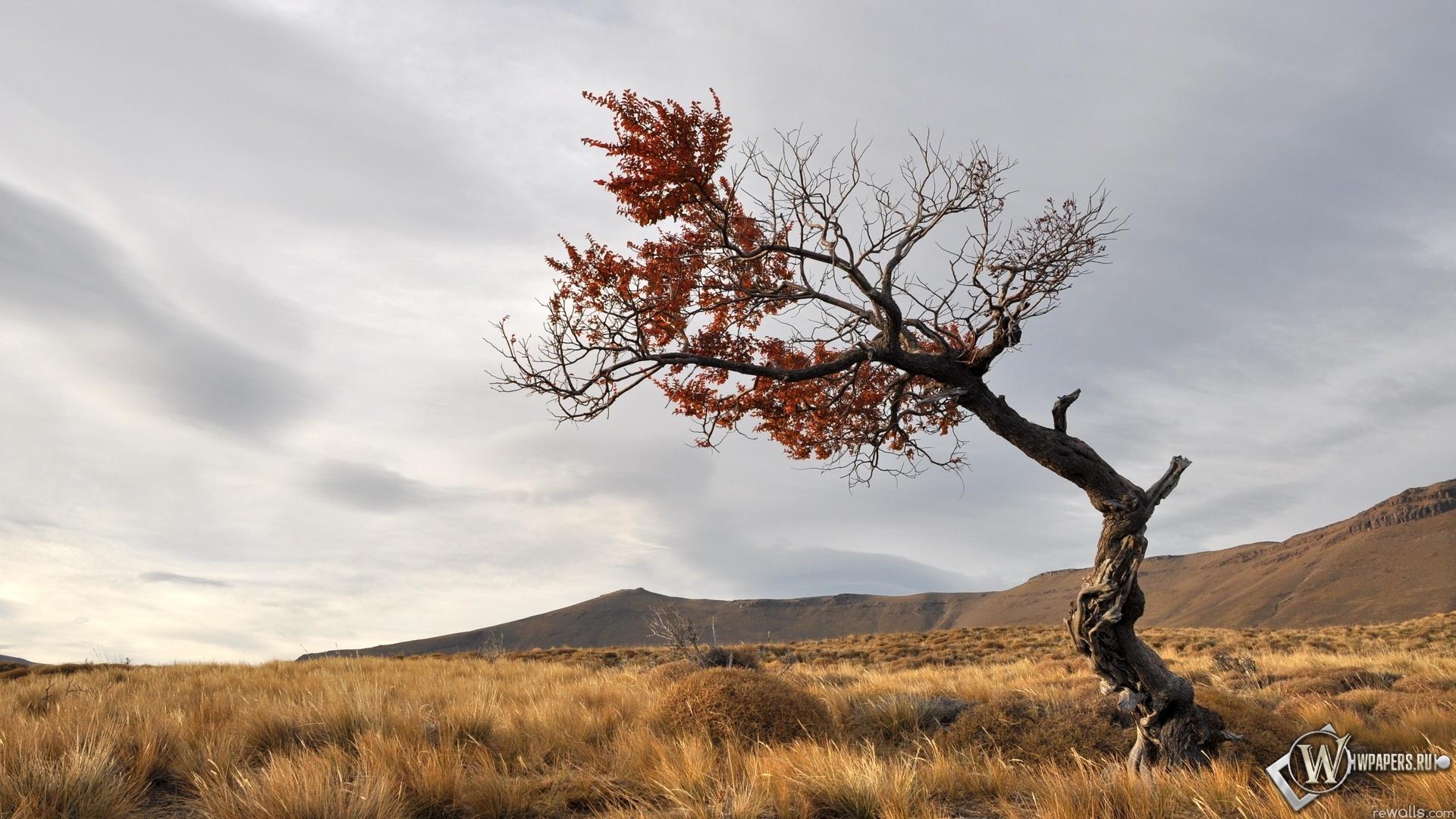 Дерево в степи 1920x1080