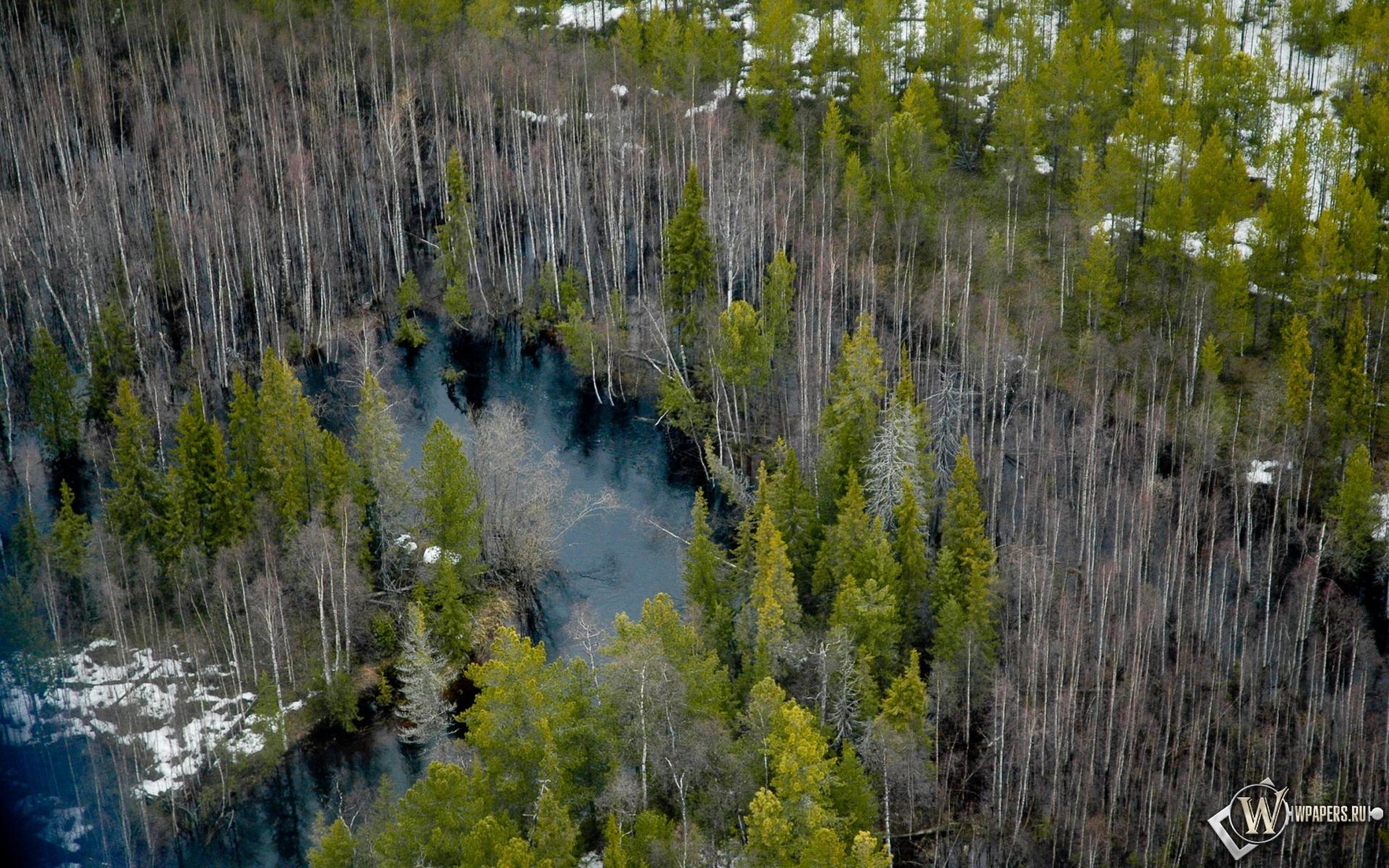 Лес лес обоев 261 деревья обоев 289 весна