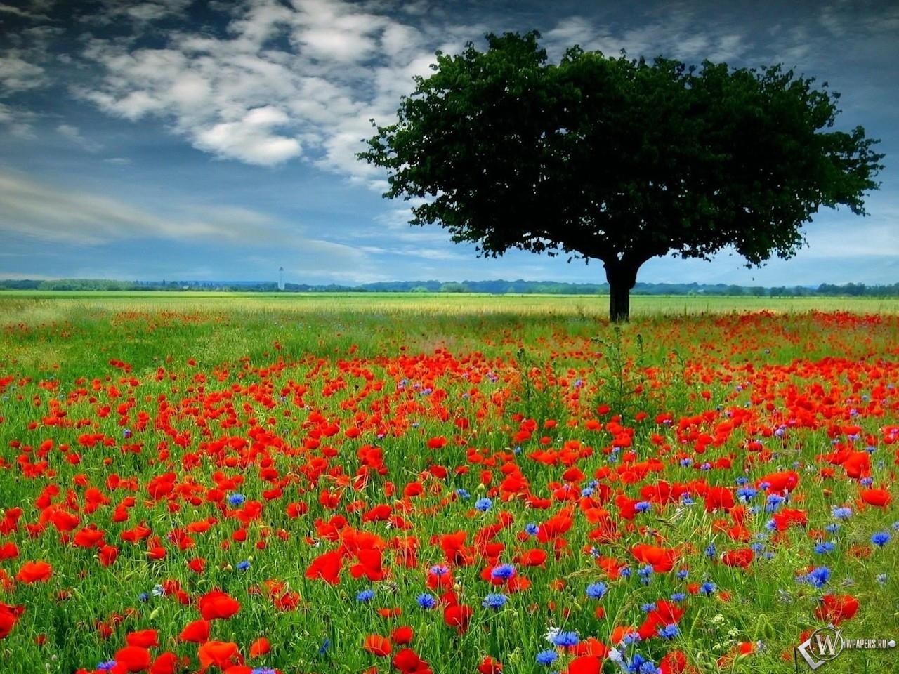 Обои дерево среди цветов поле дерево