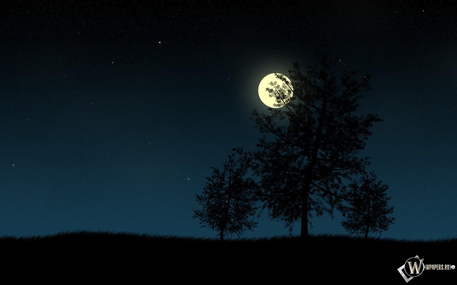Деревья в ночи 1920x1200