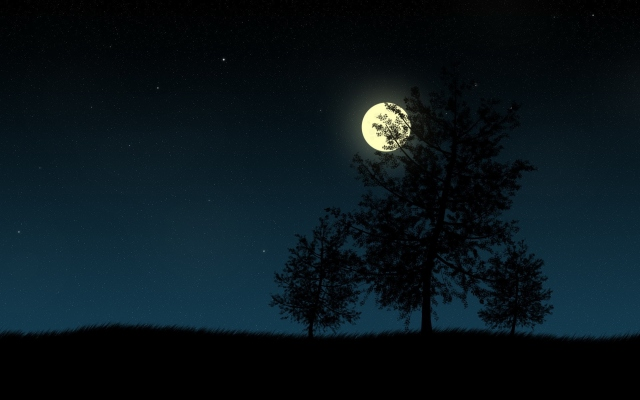 Деревья в ночи
