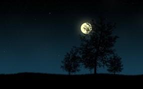 Обои Деревья в ночи: Деревья, Ночь, Луна, Звёзды, Вектор, Деревья