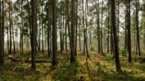 Обои Лес: Свет, Лес, Деревья, Природа, Трава, Деревья