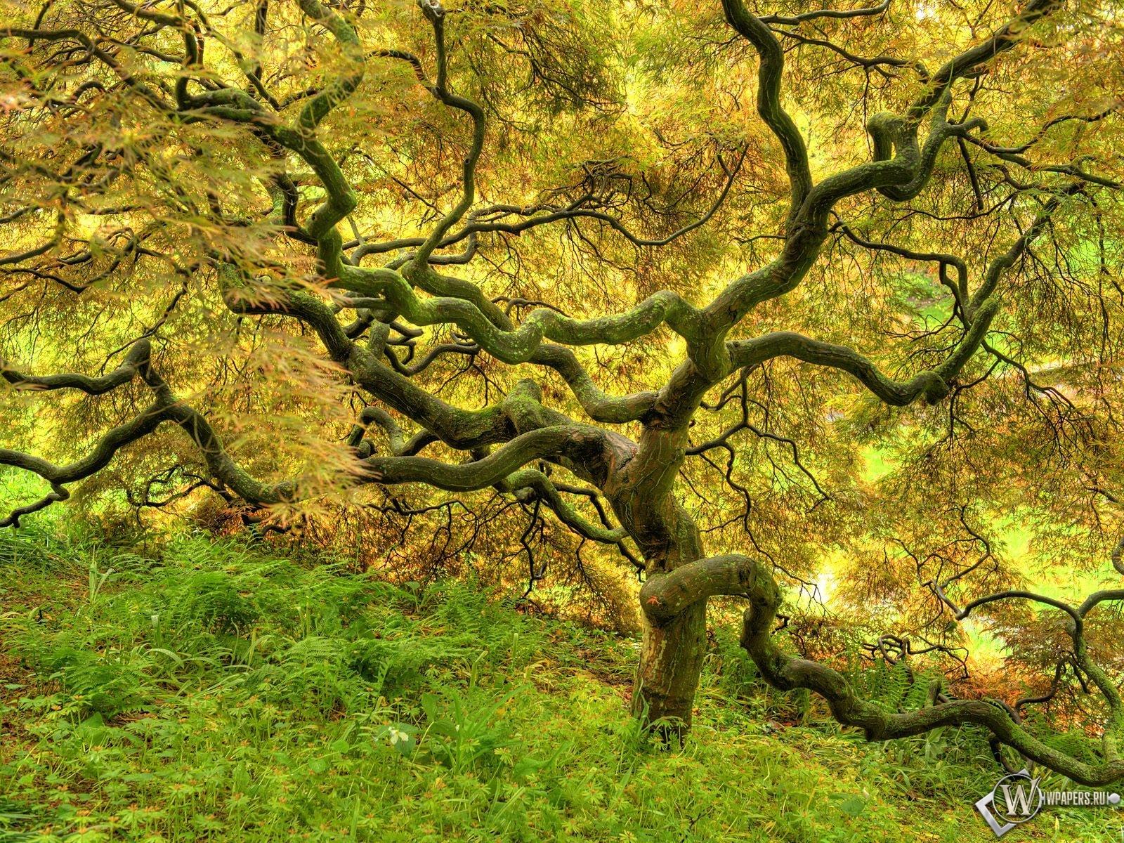 Красивое дерево 1600x1200
