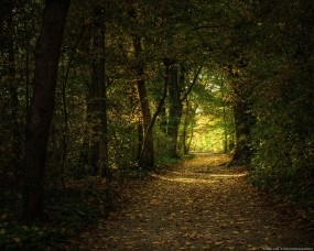 Обои Лесная тропа: Лес, Деревья, Тропа, Листья, Деревья