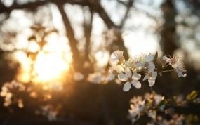 Цветы под солнцем