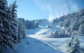 Обои Спуск с горы: Зима, Снег, Ели, Сноуборд, Лыжи, Спорт