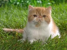 Обои Кот в траве: Кот, Трава, Кошки