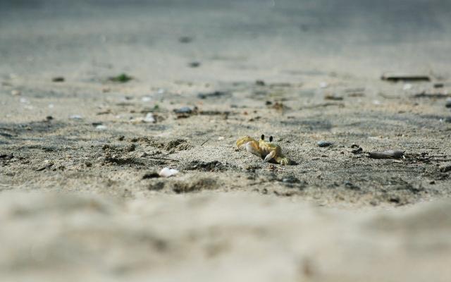Краб в песке