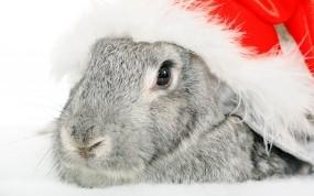 Обои Новогодний кролик: Праздник, Шляпа, Кролик, Животные
