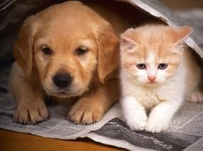 Обои Котёнок и щенок: Щенок, Котёнок, Дружба, Животные