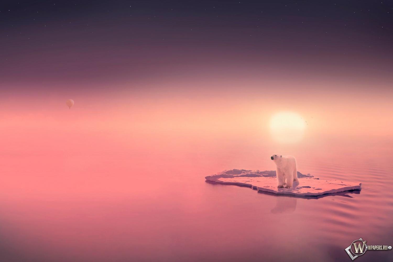 фото белый медведь на рабочий стол