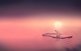 Обои Белый медведь на льдине: Вода, Солнце, Медведь, Медведи