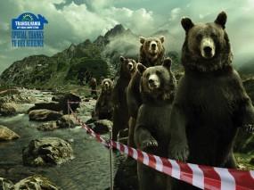 Обои Очередь медведей: Юмор, Медведи, Очередь, Медведи