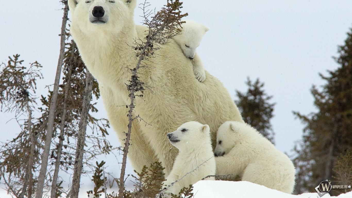 Смешные картинки с медведями 35 фото  Прикольные