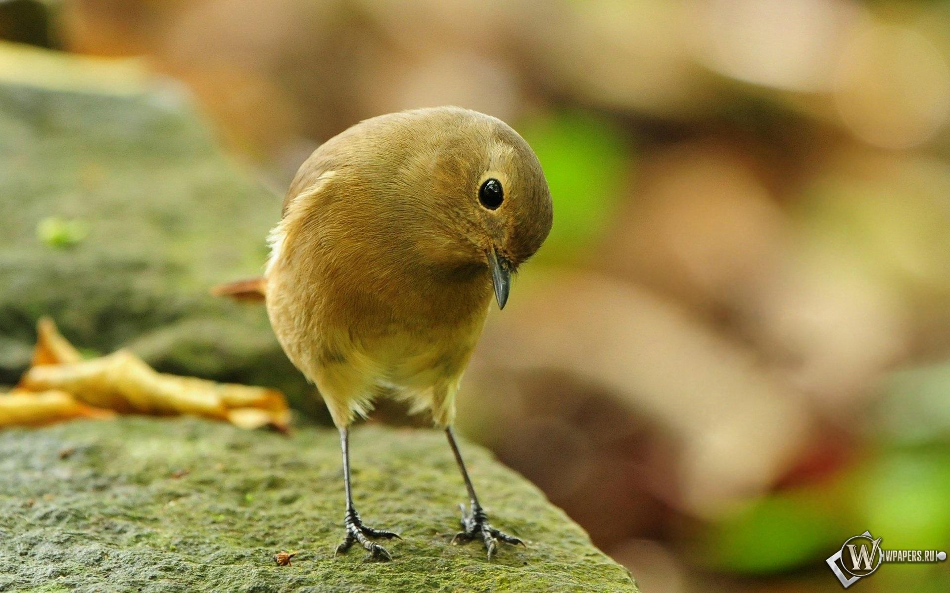 птичка-невеличка 1920x1200
