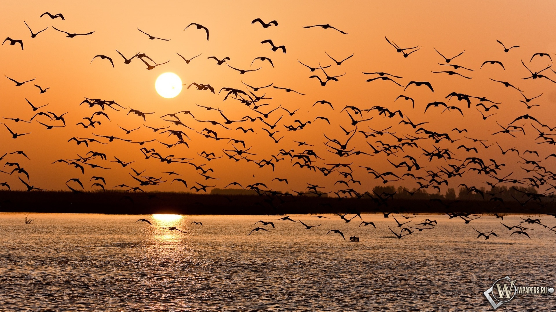 Стая птиц 1920x1080
