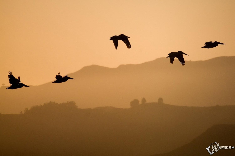 Обои птицы в полёте полёт птица небо