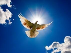 Обои Голубь в небе: Небо, Белый, Голубь, Птицы