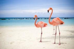 Обои Два фламинго: Пляж, Море, Птица, Фламинго, Птицы
