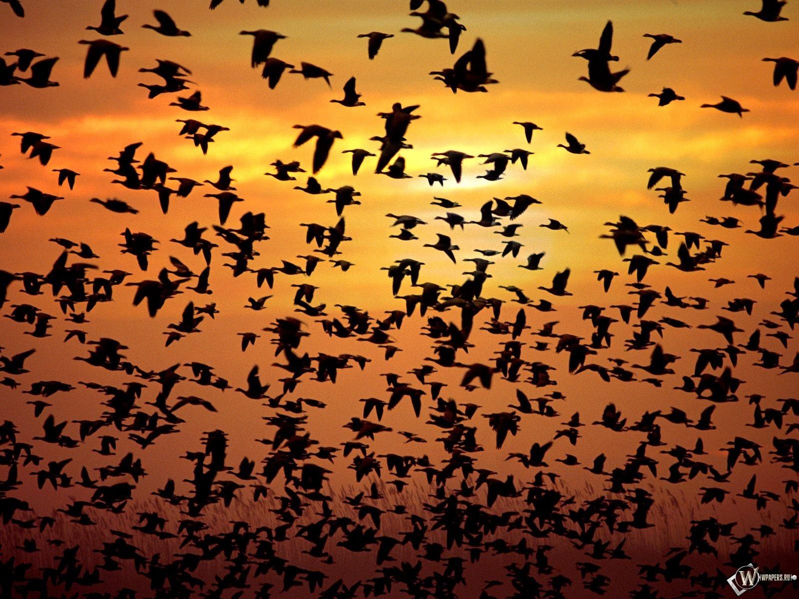 Стая птиц 1600x1200