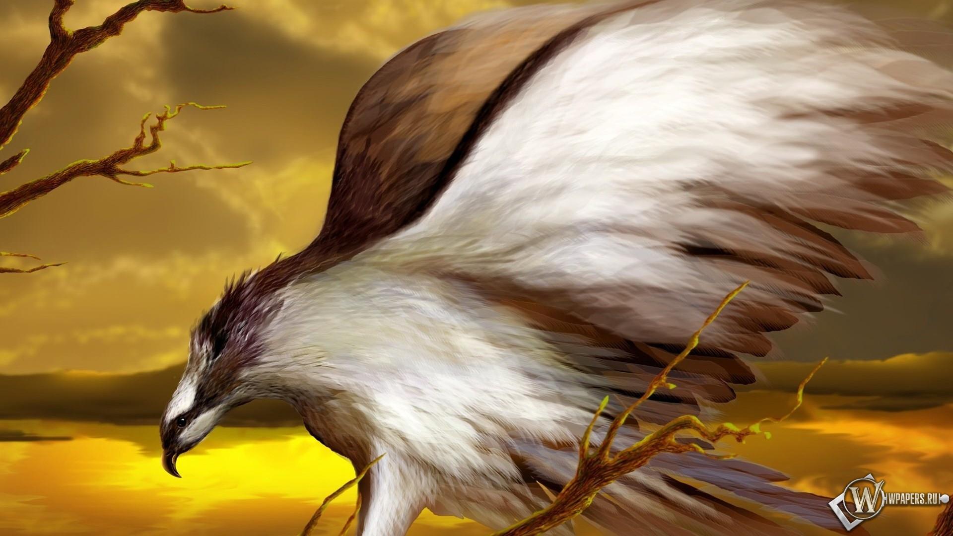 Хищная птица 1920x1080